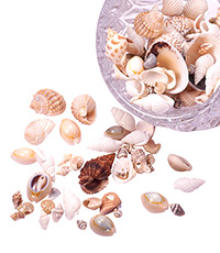 Shell & Pearl